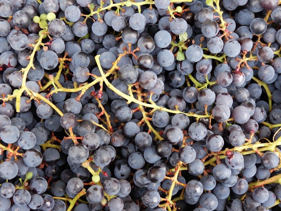 串葡萄,水果,葡萄,自然,Owocostan