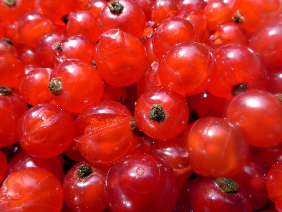 醋栗,浆果,软果,红色,水果,排骨
